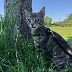 Genuine Leather Kitten Harness